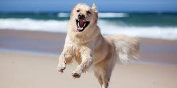A happy dog playing on the private beach at Sandgreen